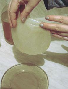 Чайный гриб можно размножать и другим способом: 0,5-1 л 8-10-суточного...
